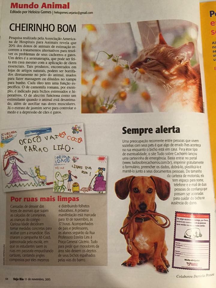 Tudo Sobre Cachorros Veja Rio