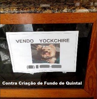 vende-se cães