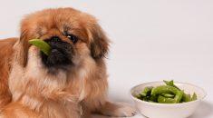 verduras e legumes que cachorros podem comer