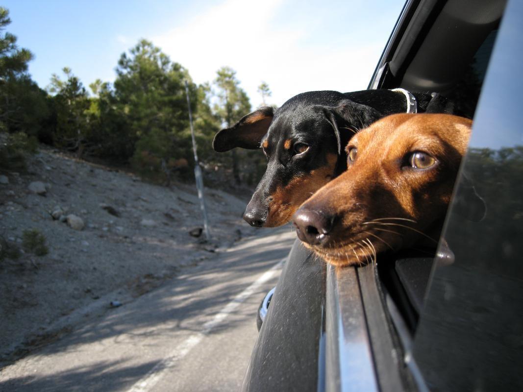 viajar com cachorro