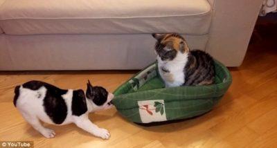 video-de-caozinho-filhote-tentando-expulsar-gato-de-sua-cama-vem-comovendo-internautas-apos-se-tornar-viral-na-internet